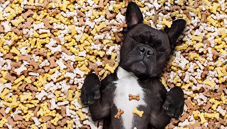 dog surrounded by dog treats