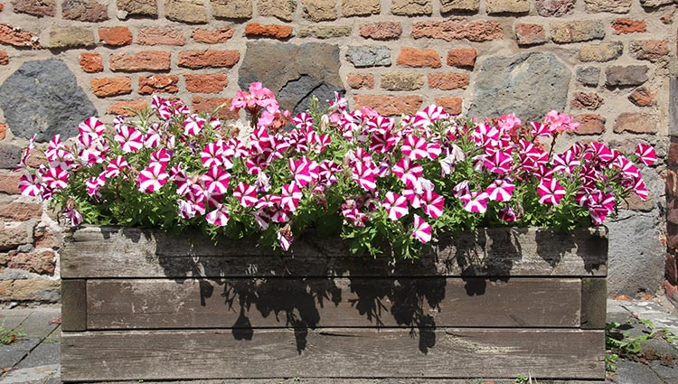 planter box flowers